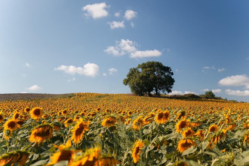 La norma ISO 22000 è lo standard di riferimento per i sistemi di gestione della sicurezza nel settore agroalimentare