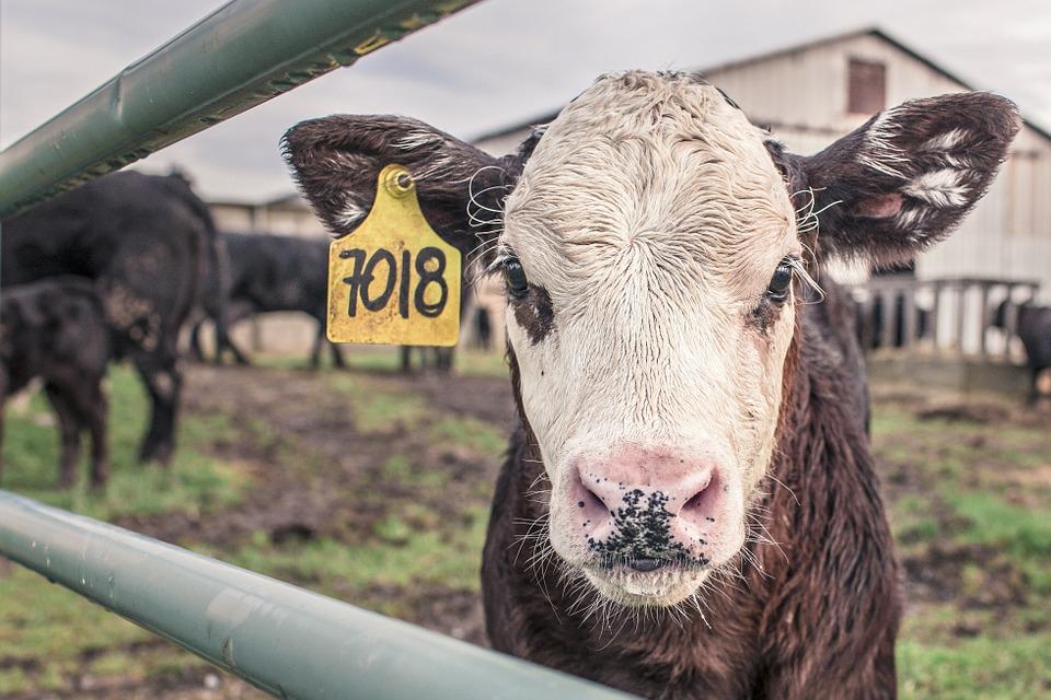 Le zoonosi e il rischio biologico