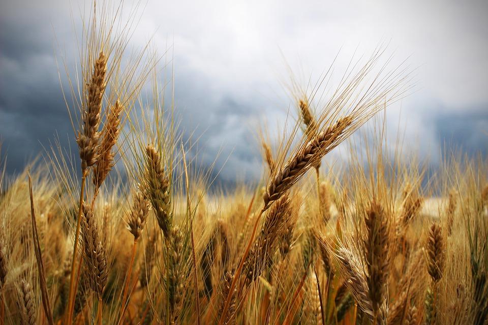 """La ISO 22000 – """"Sistemi di gestione per la sicurezza alimentare - Requisiti per qualsiasi organizzazione nella filiera alimentare"""" è lo standard di riferimento applicato dagli operatori del settore alimentare, valido a livello internazionale, il quale nella nuova versione ISO 22000:2018 introduce l'High Level Structure (HLS), coerentemente a tutte le norme di sistema."""